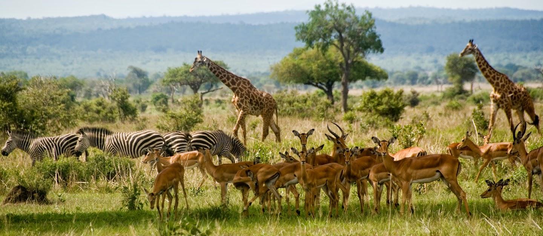 Nationalpark Mikumis, in Tansania.
